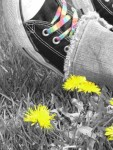 Flowers and Rainbow Laces