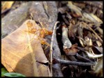 Ants of Ants
