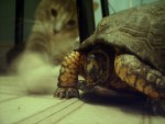 Turtle and Puss