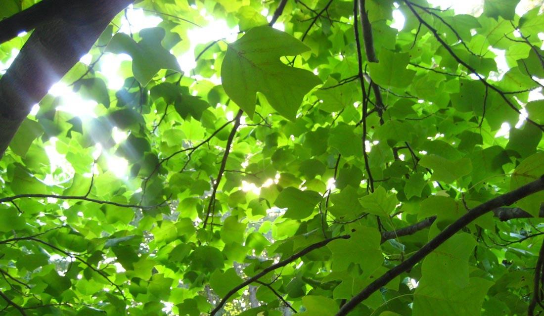 cbimg9.com/graphics/08/12/66069c.jpg