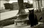 Creeper Cat