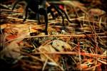 Slick Spider