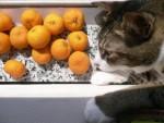 Donut & Tangerines