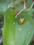 Ladybugg :)
