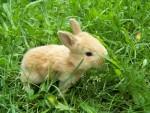 my baby bunny