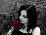 Rose For Thy Love