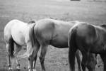 horsie butts