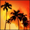 Palm Tree Sunset }